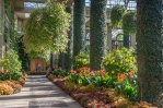 Inside the Conservatories, strong sun created shadows in the walkways.