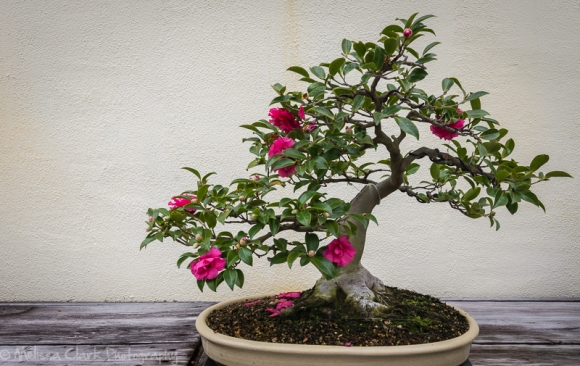 Beautiful Bonsai At The National Arboretum Garden Shoots