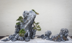 National Bonsai and Penjing Museum, National Bonsai Foundation, US National Arboretum