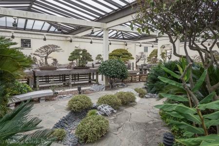 National Bonsai and Penjing Museum, National Bonsai Foundation,  US National Arboretum