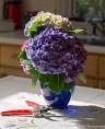 Hydrangea Blue Danube_20150622_0003