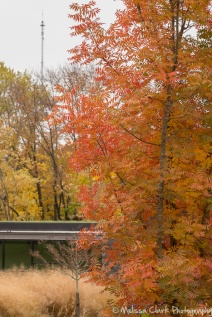 The grey stone of the building is a foil for strong fall colors.