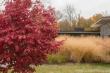 Tall grasses and a Persian parrotia tree take center stage.