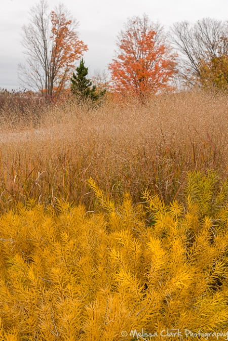 Perennials and grasses in a planting farther away from the building.