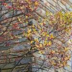 FranciscanMonastery_20151116_0029
