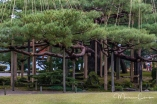 Sturdy supports keep these ancient pine branches in place.