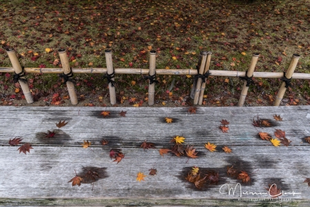Even the benches are poetic in the rain.
