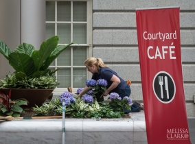 One of the SI Gardens staff members adding hydrangeas last summer.