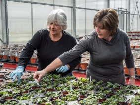 "Vicki DiBella and a volunteer showing our group small ""plugs"" of perennials being grown on for use at an SI garden."