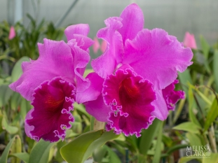 The Orchid Greenhouse was full of wonderful colors.