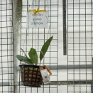 "We loved the ""Orchid Rehab"" Station"" on one of the walls."